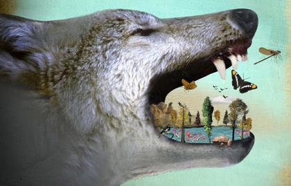 Trophiccascadewolves
